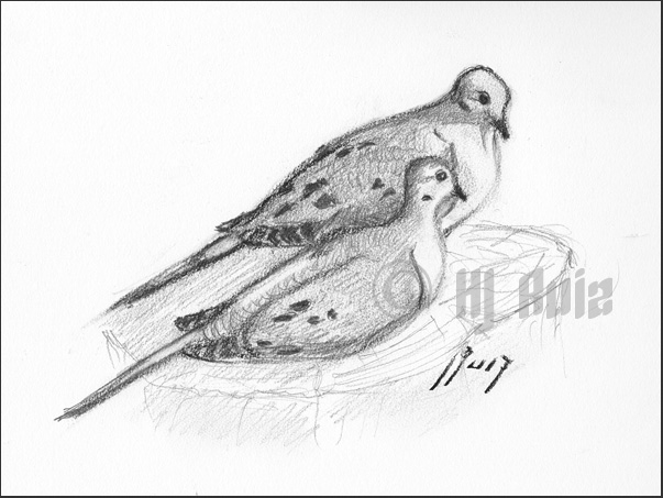Similar Galleries: Mourning Dove In Flight , Mourning Dove Tattoo ,Dove Bird Drawing Tattoo