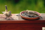 Baby and Mom H. Finch
