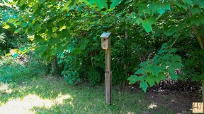 Bluebird box