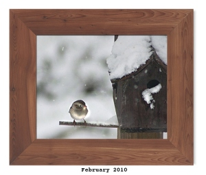 Field Sparrow -- Feb. 2010