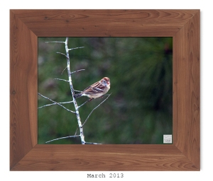 Field Sparrow -- Mar. 2013 --