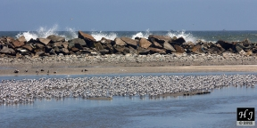 The waves pound the wall of rocks intensibly
