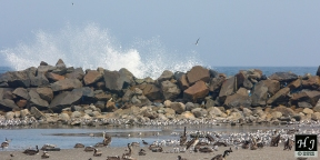 Calculate the size of waves vs. sea birds
