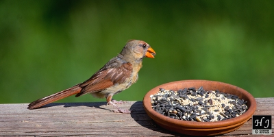 N. Cardinal (F)