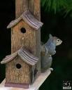 """""""Nutcase"""" the squirrel"""