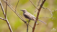 N. Mockingbird - Let me see...who do I piss off today?
