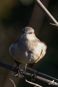 "N. Mockingbird - "" Don't say one word about me looking fat!"""