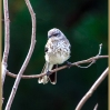 Young Mockingbird (Orphan # 1)