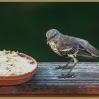 Young Mockingbird (orphan # 2)
